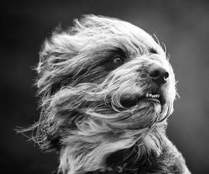 Seth Casteel Dog Photography