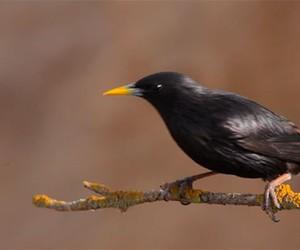The birds of Spain