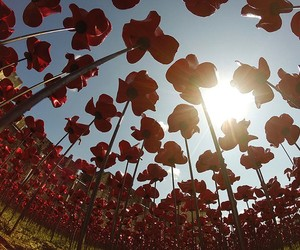 888,246 Poppies To Honor WWI Fallen Soldiers