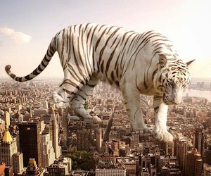 Surreal photomontages