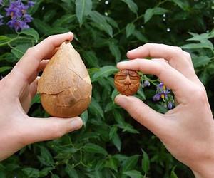 Avocado Stone Faces