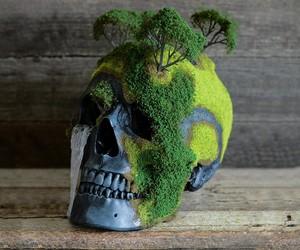 Bonsai Mountain Skulls