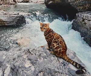 Cat on travel