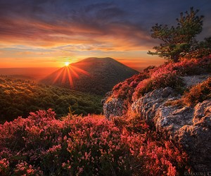 Great Nature Pictures By Maxime Courty