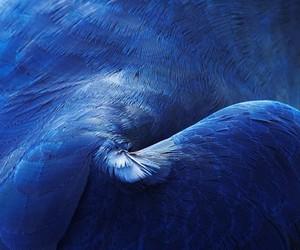Thomas Lohr 'Birds of A Feather'