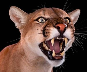 Photos of Wild Animals Captured from Just a Few Fe