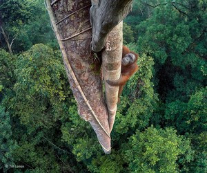 THE WILDLIFE PHOTOGRAPHER OF THE YEAR: 2016